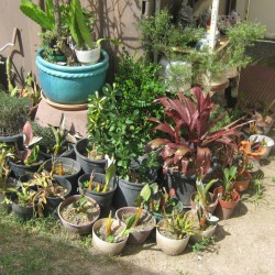 all sorts plants/& pots